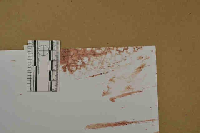 Tyler Hadley Evidence Photos 2 Murderpedia The